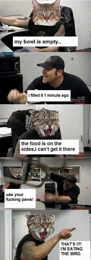 Just catting arround - meme
