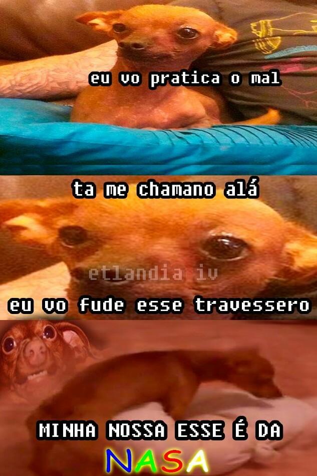 Doguinho tb ama - meme