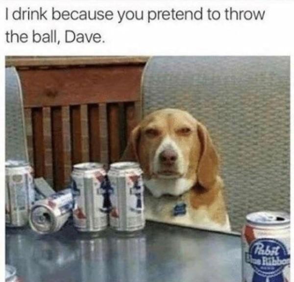 Alcoholic dog - meme