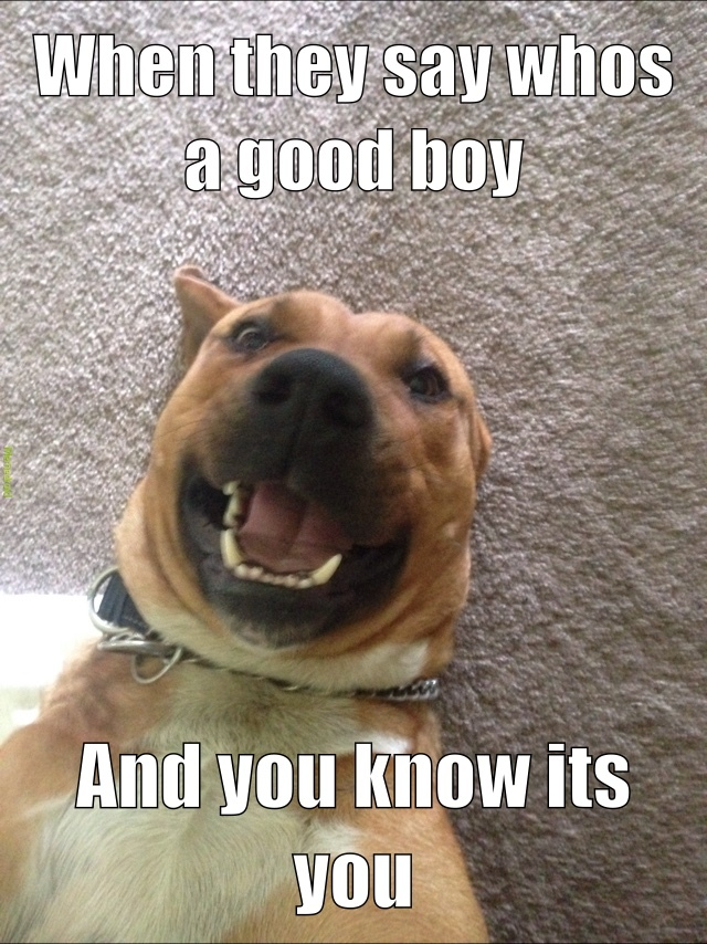10/10 good boy - meme