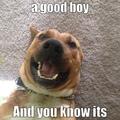 10/10 good boy