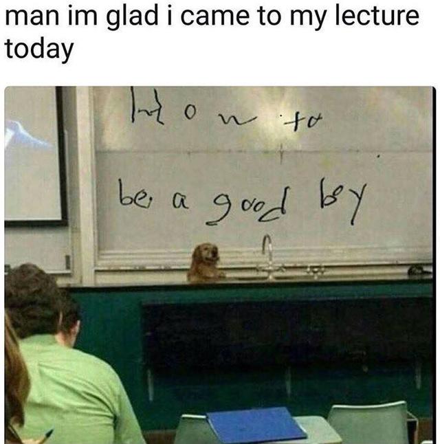 How to be a good boy by professor doggo - meme