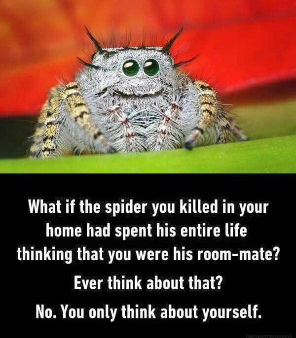 Spiders are good pets for the pillowcase jus sayin' - meme
