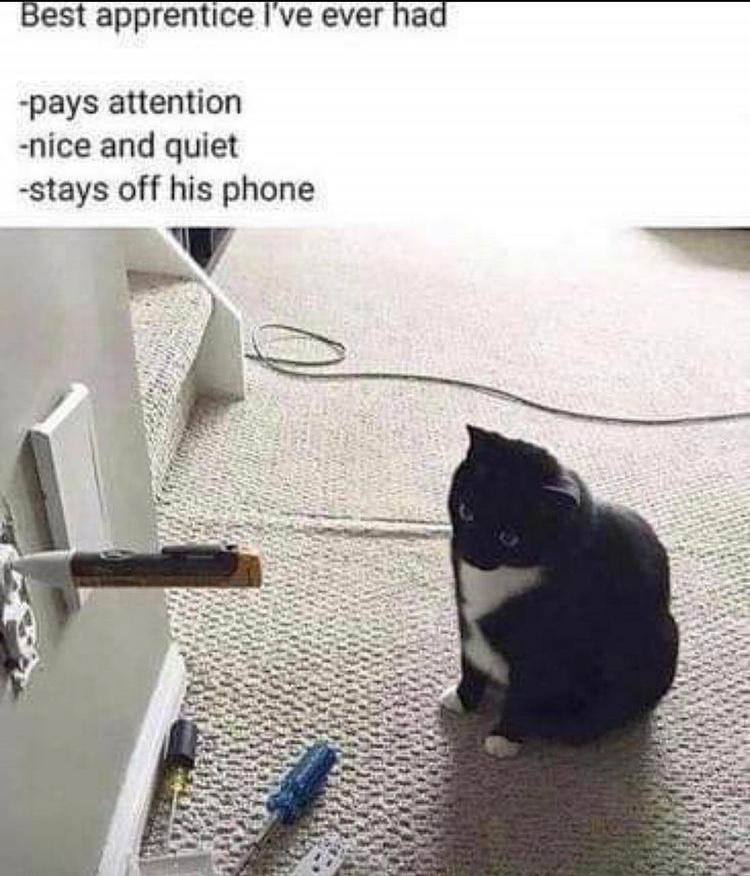 the perfect apprentice - meme