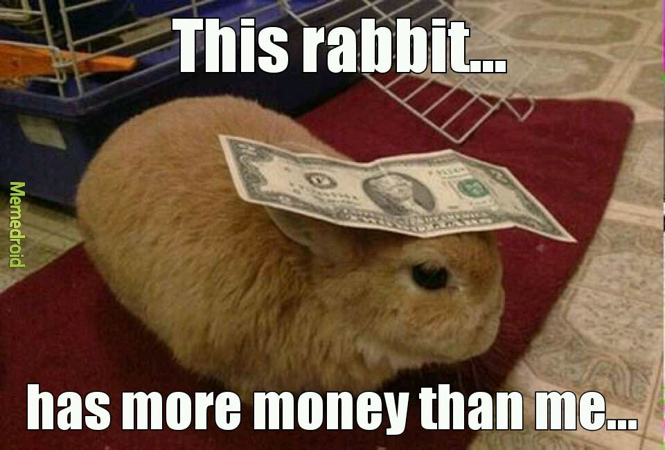 Money Bunny - meme