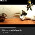 Gatito :D