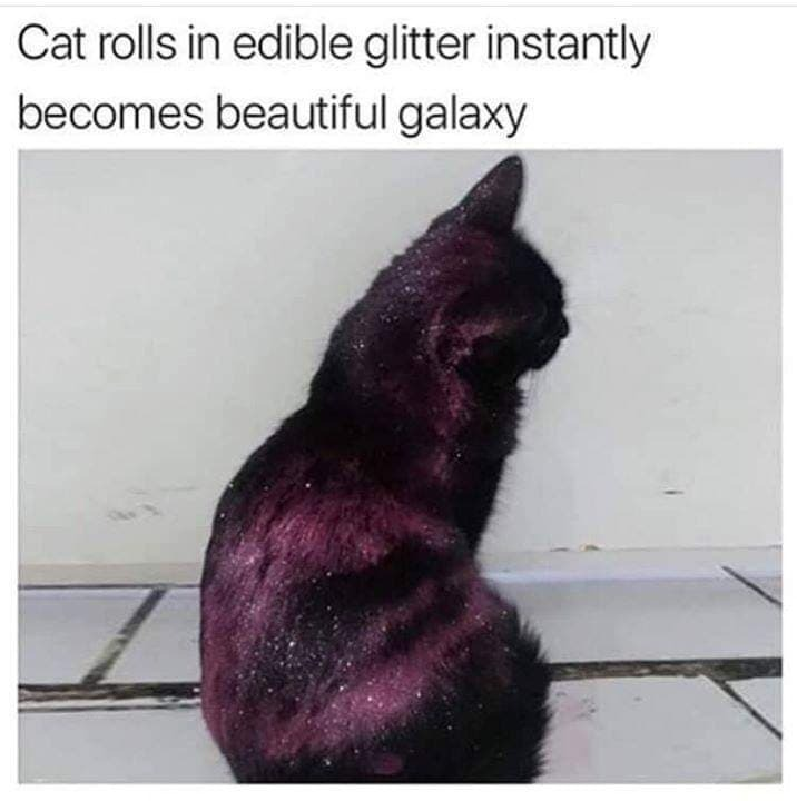 Cat Plus glitter - meme