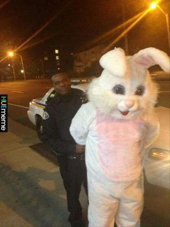 Coelho é preso por trafico de cenoura - meme