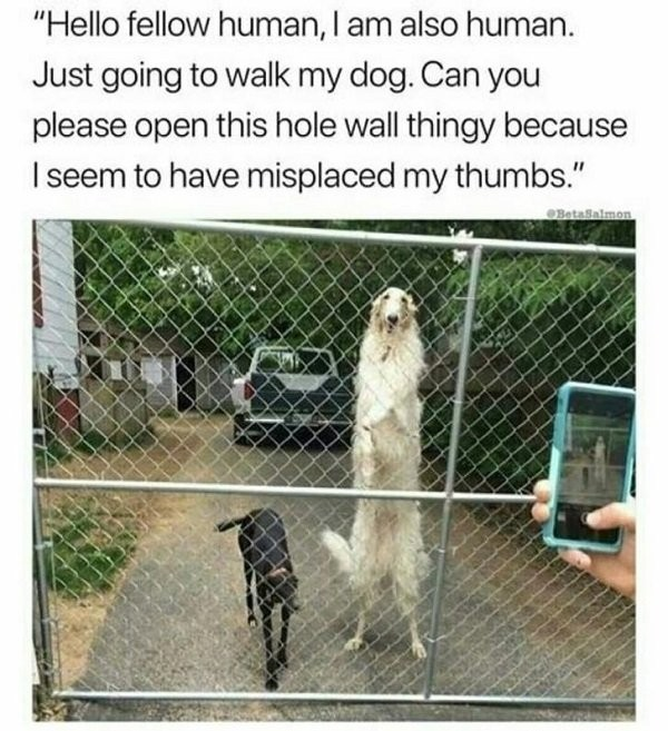 this is a ugly dog - meme