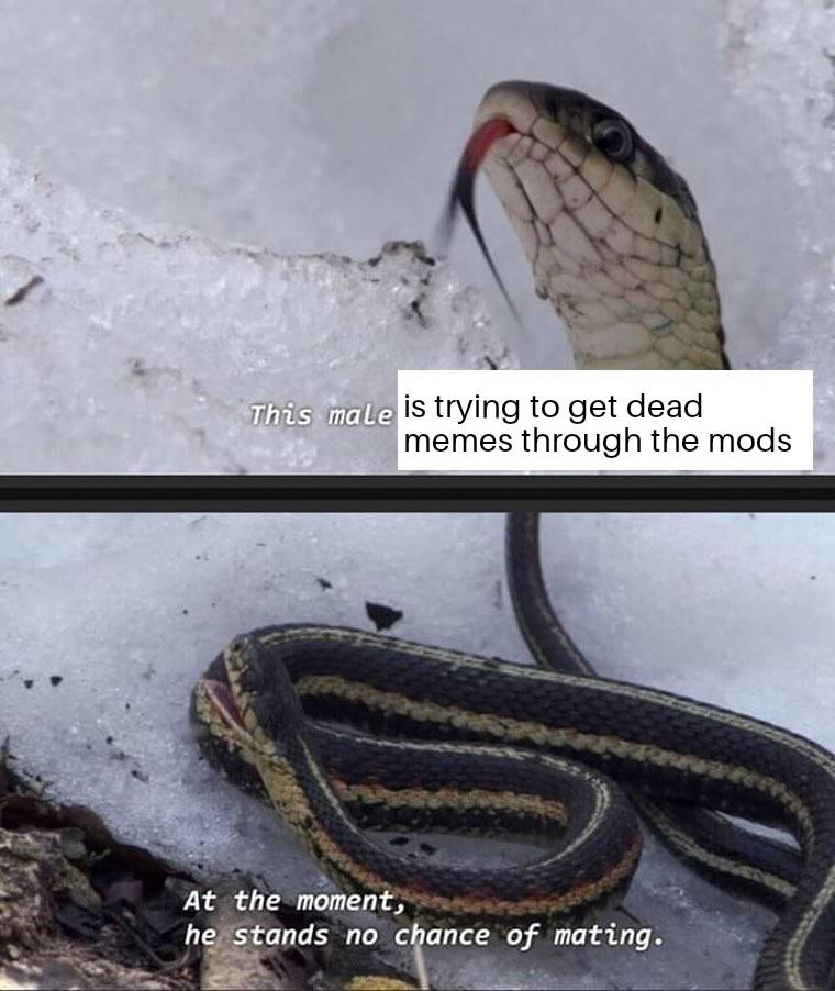 When I'm bored - meme