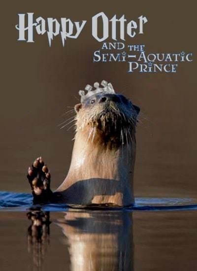 Happy Otter - meme