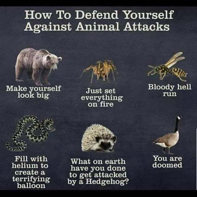 How to defend yourself against animal attacks - meme