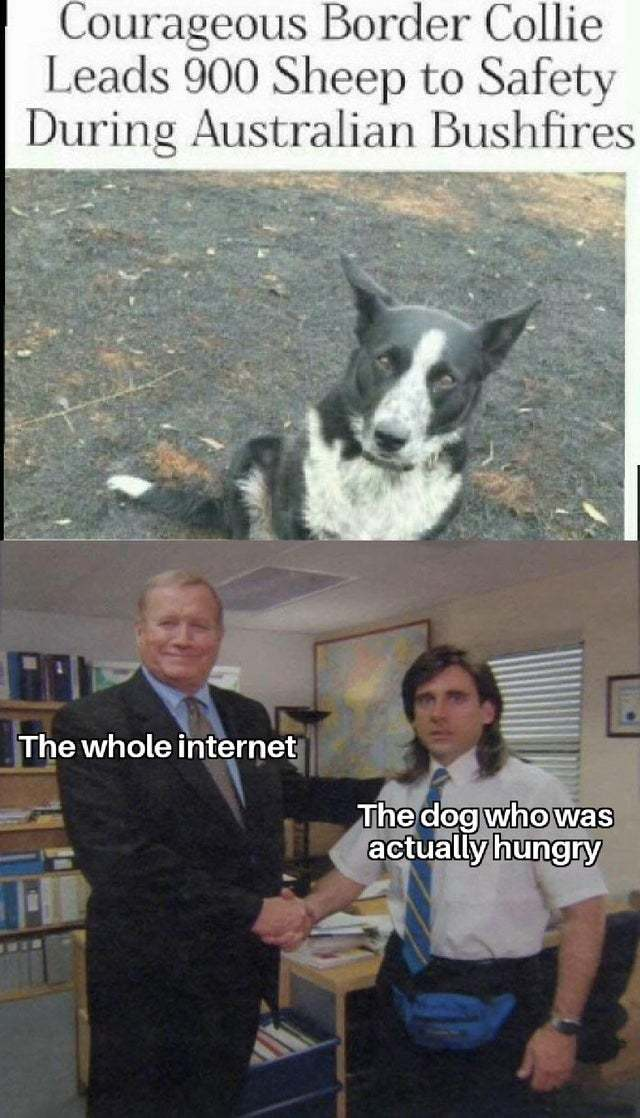 The truth about the courageous border collie - meme