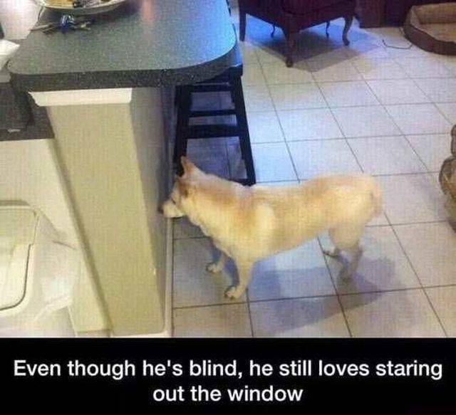 Cute doggy - meme