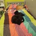 Mes chats ont décidé que je dormirai par terre ce soir
