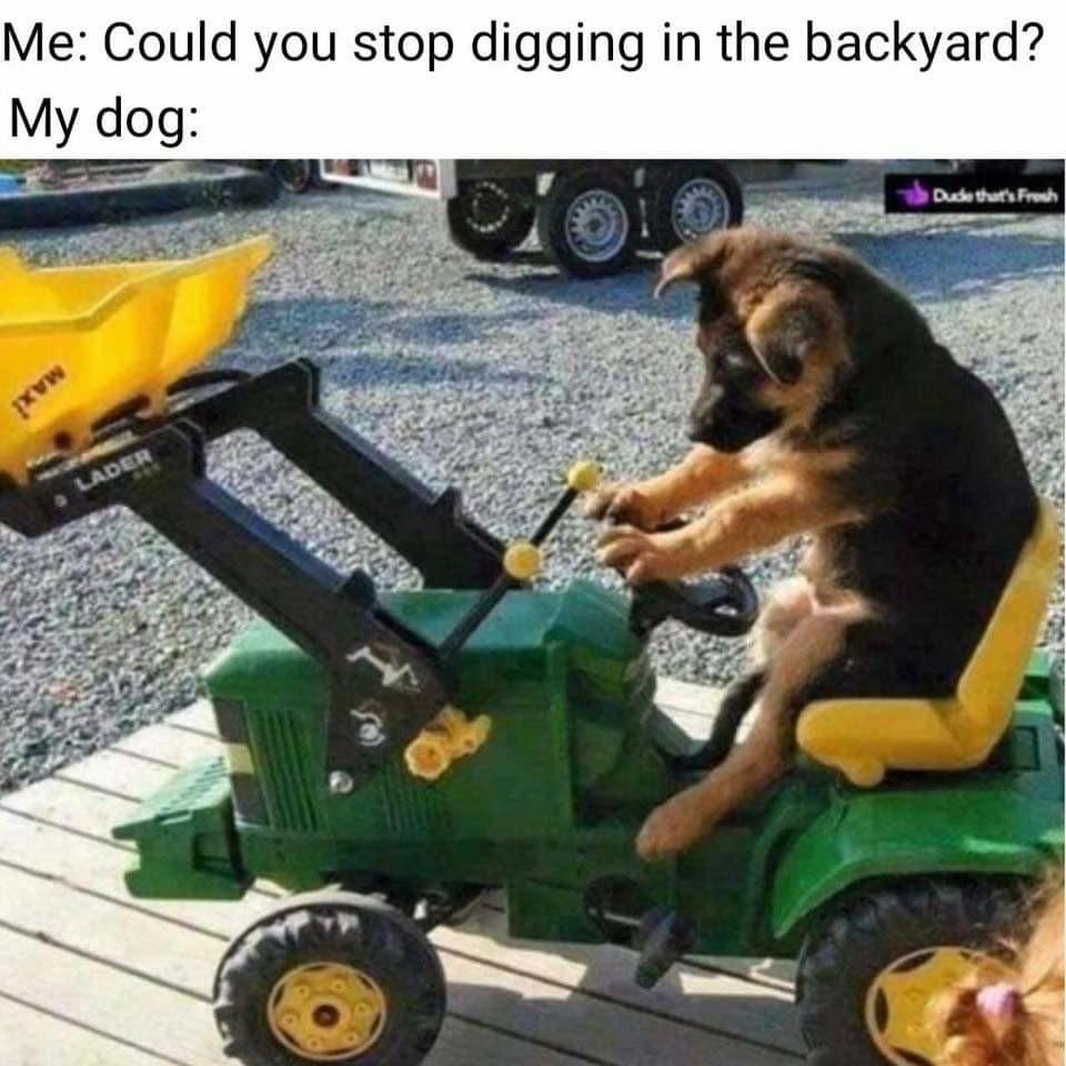 Cute pupper - meme
