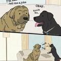 Doggo bork bork bork!