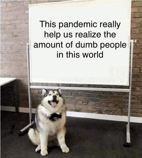 This pandemic really help us realize the amount of dumb people in this world - meme