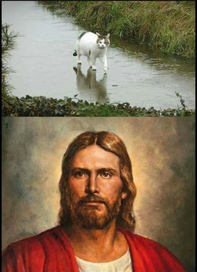 gato jesus - meme