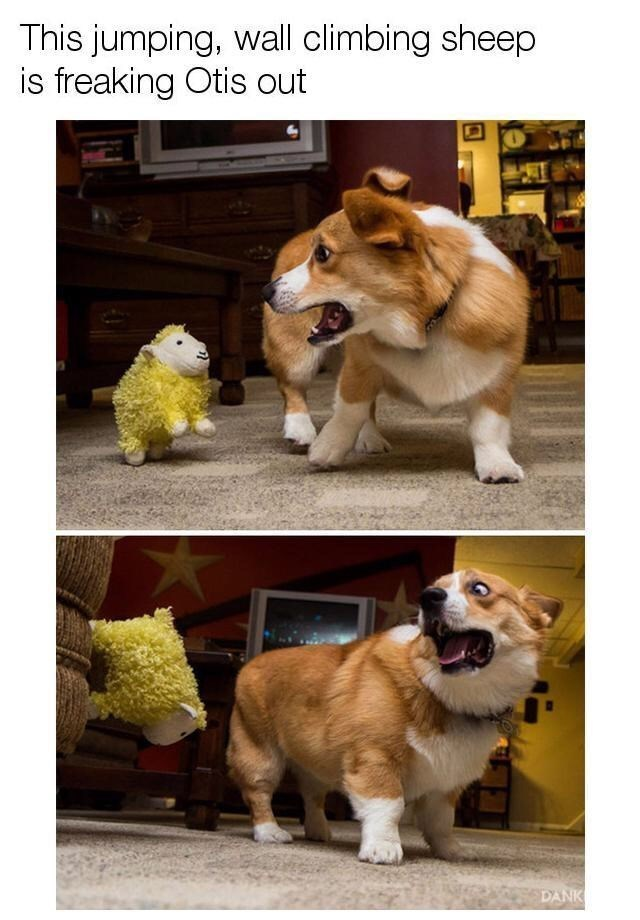 lol...that dog is funny - meme