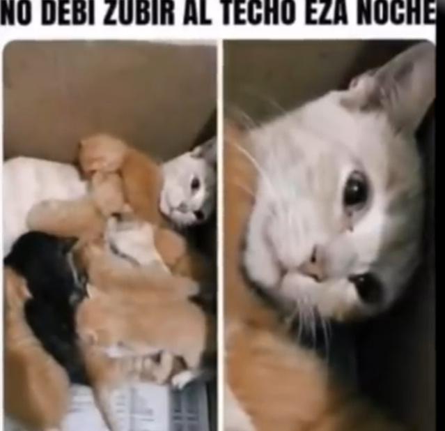 F por la gata - meme