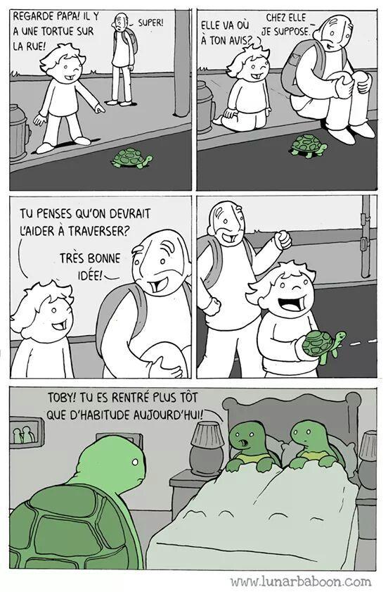 Morale: n'aidez pas les tortue - meme