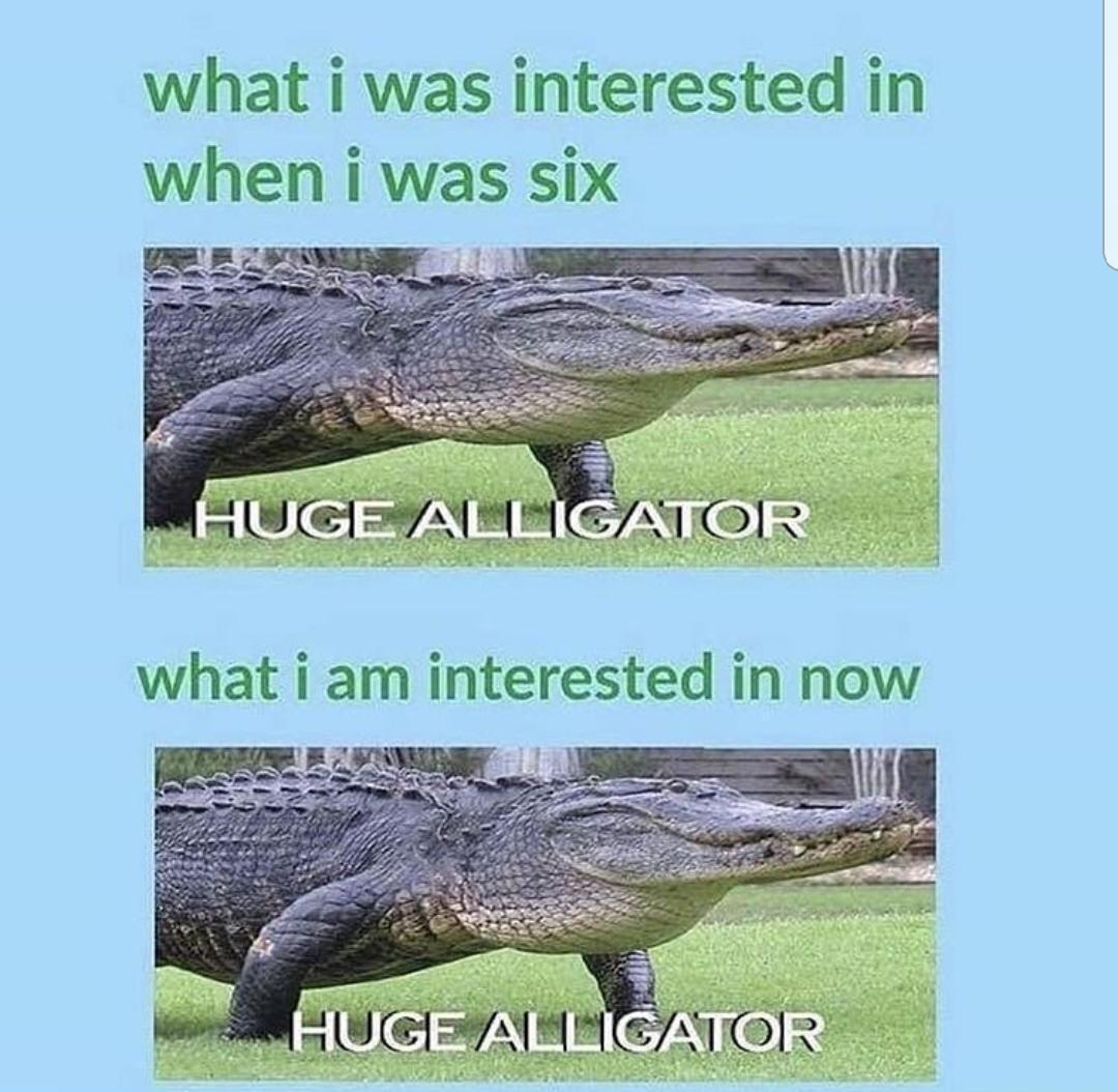 dongs in an alligator - meme