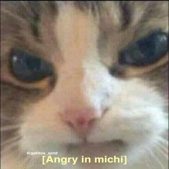 Michi enojado uwu - meme