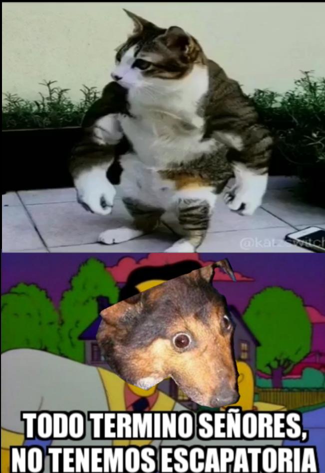 Este me costó en editar xdxd - meme
