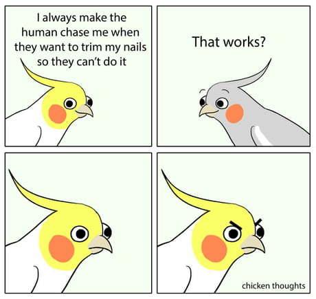 Smart Birb - meme