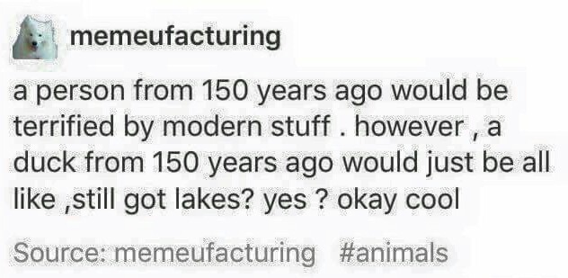 Duck - meme