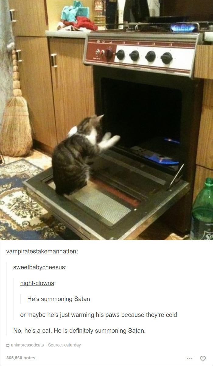 Evil Cats - meme
