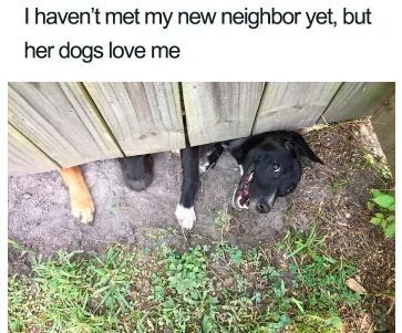 I miss my doggos :( - meme