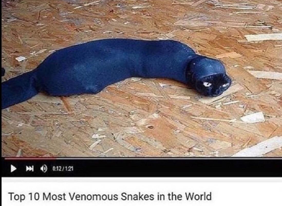 venomous asf - meme