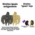@portallibertarianismo