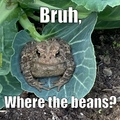 bruh toad
