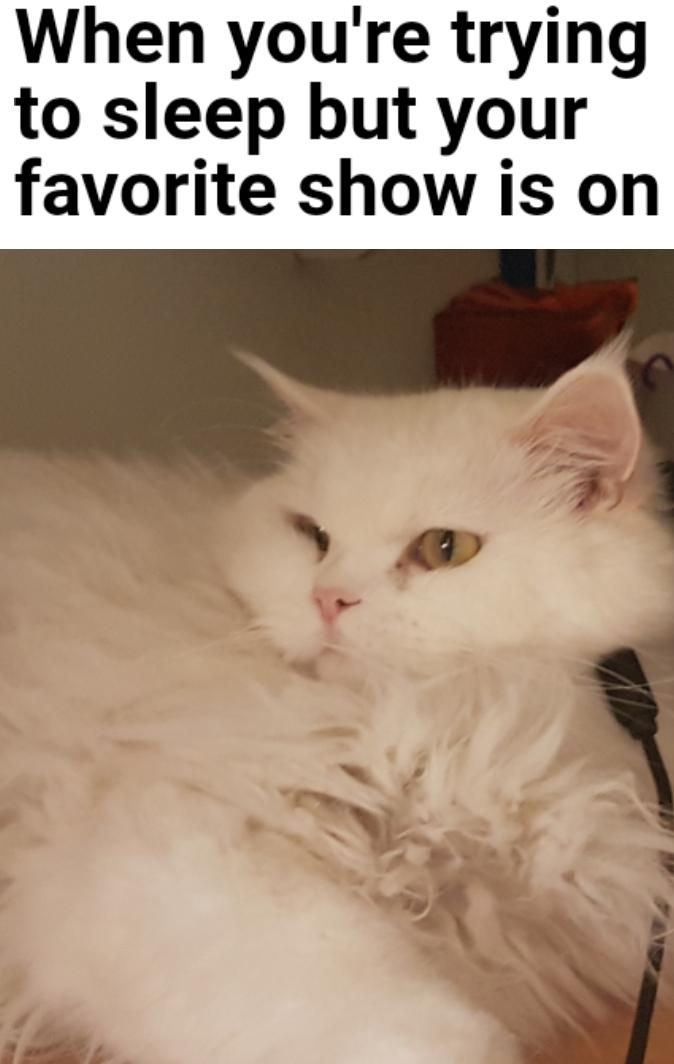 My catto - meme