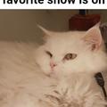 My catto