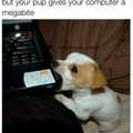 Pupper :,)