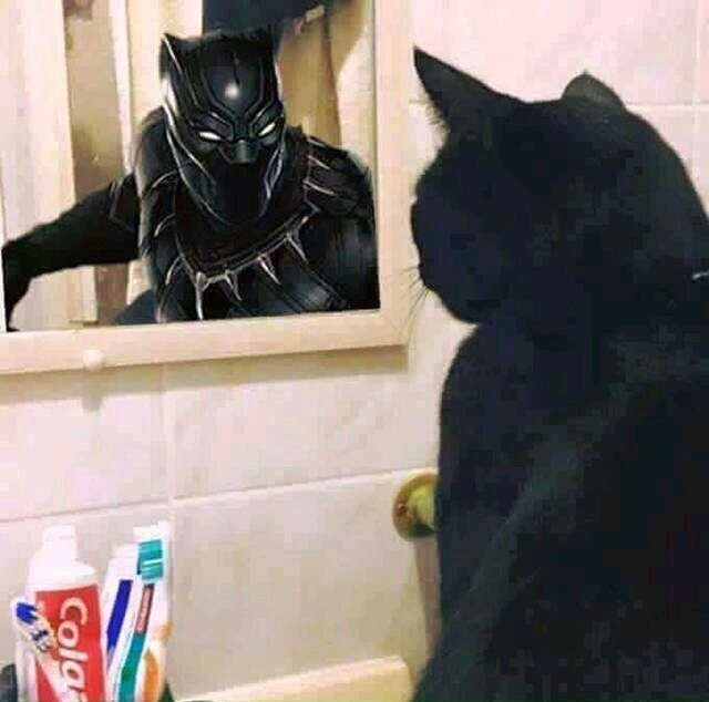 Black panther - meme