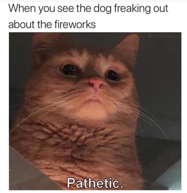 Pathetic creature - meme