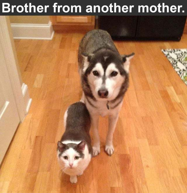 Would that be an stepbrother? - meme