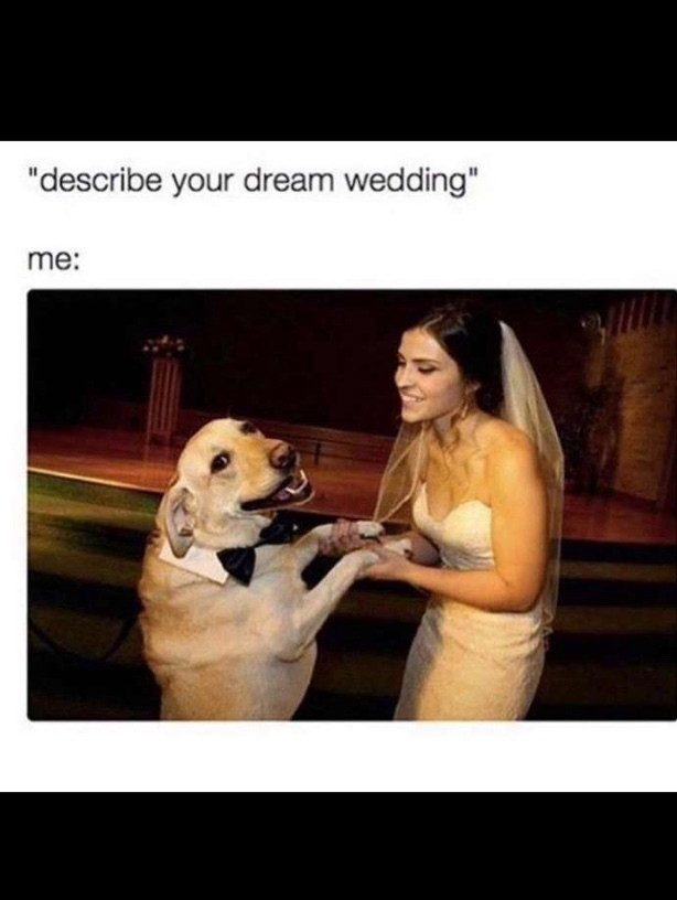 doggo is getting married imma cry - meme