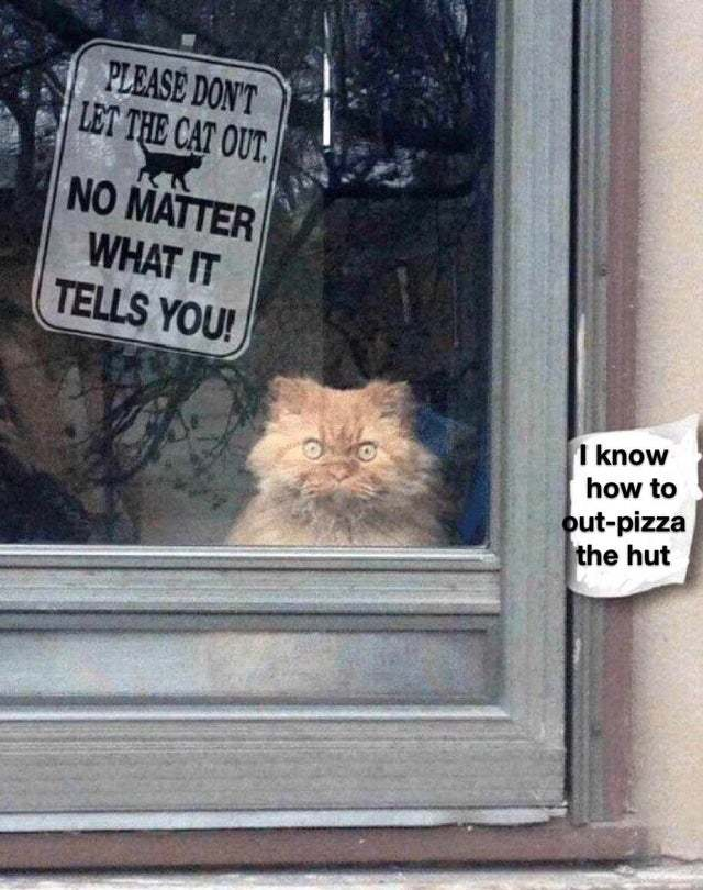 Please do not let the cat out - meme