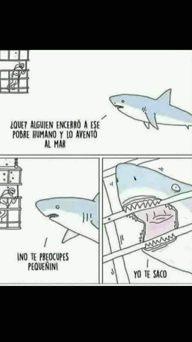 AlamadrexD - meme
