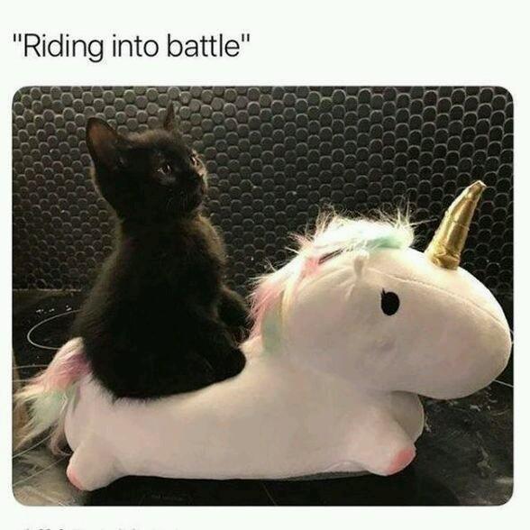 Cute cat on unicorn - meme
