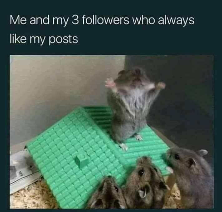 Thank you followers - meme