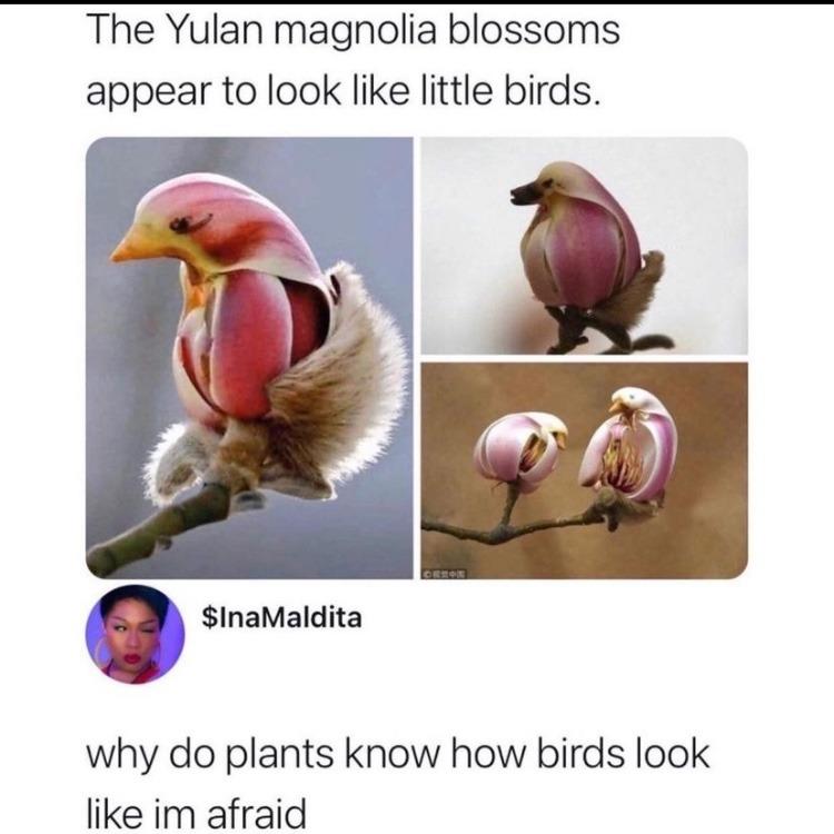plant bird - meme