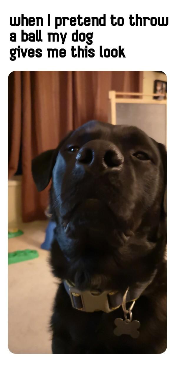 Chop the dog - meme