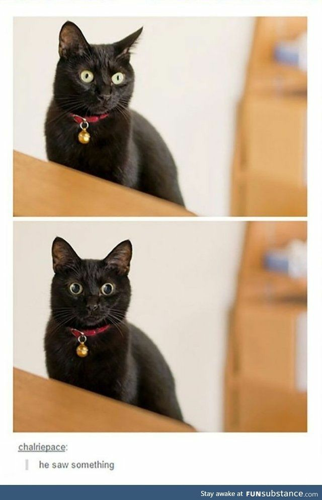 I want a black cat so bad. they're so beautiful - meme